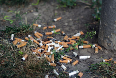 Zigarettenkippen auf der Erde | Cigarette butts on soil