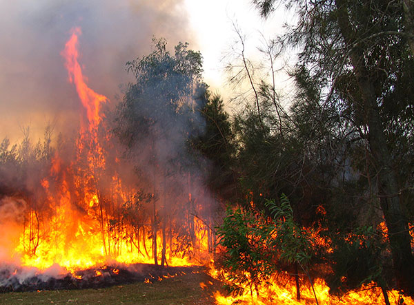 Zigarettenkippen sind eine der häufigsten Ursachen für Waldbrände